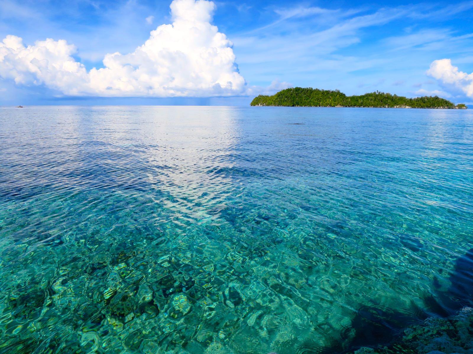 Korallimerta
