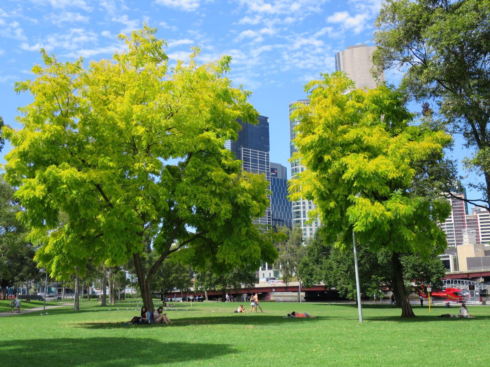 Epätodellisen vihreät puut downtownissa (tätä kuvaa ei ole käsitelty mitenkään vaikka se siltä näyttääkin!)
