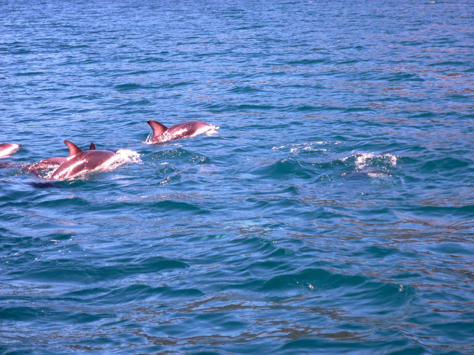 Matkalla näkyi myös delfiinejä