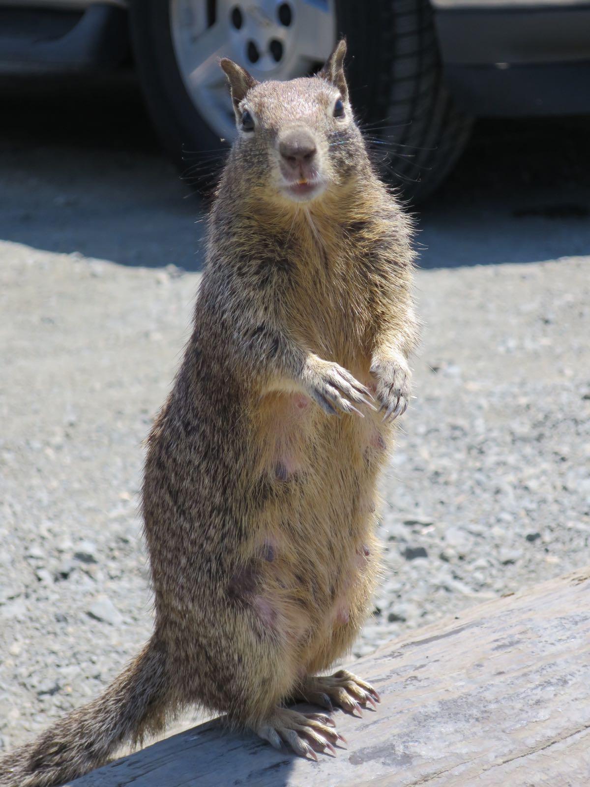 Pysähdyspaikan orava!