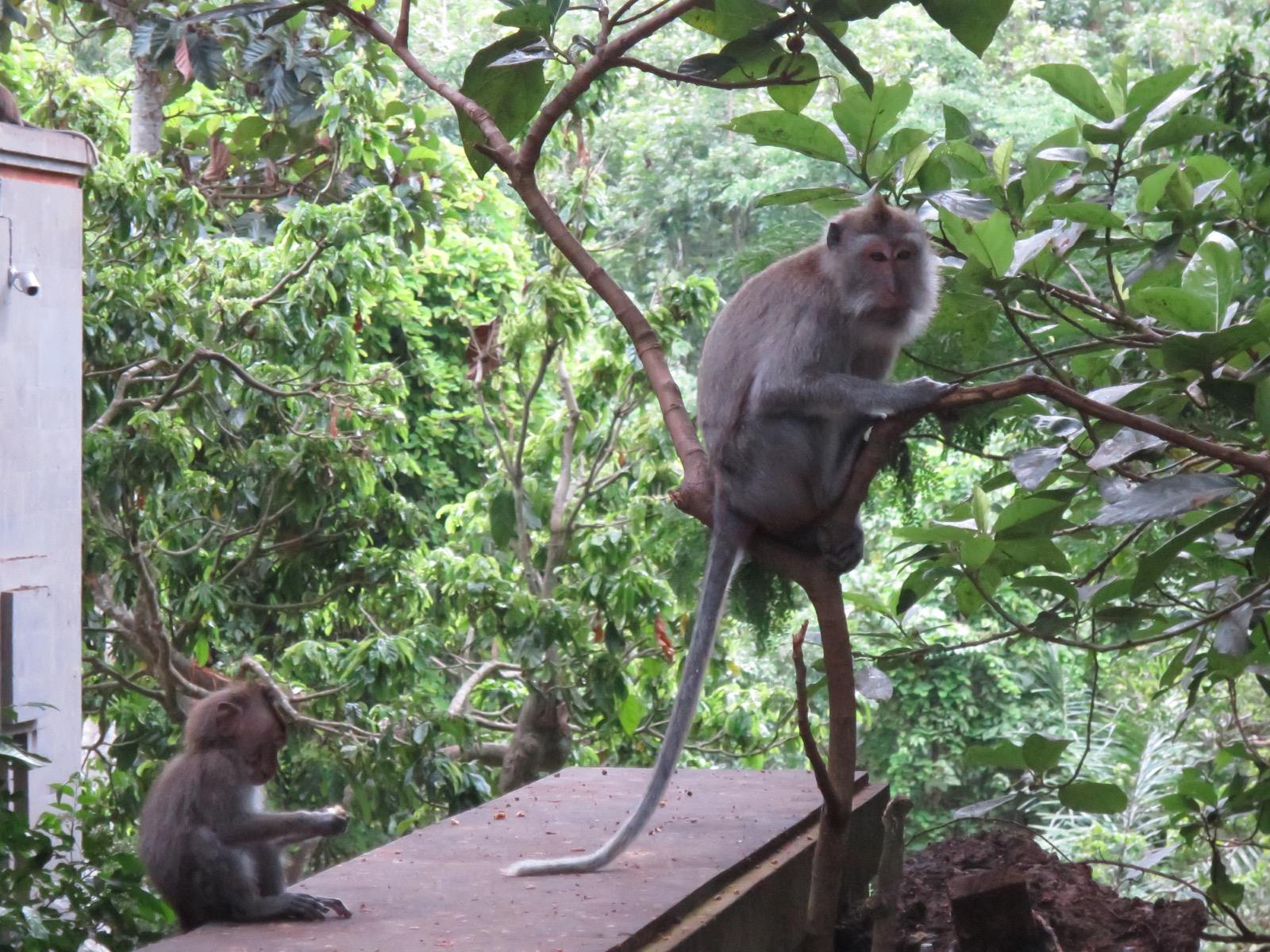 Apinametsästä