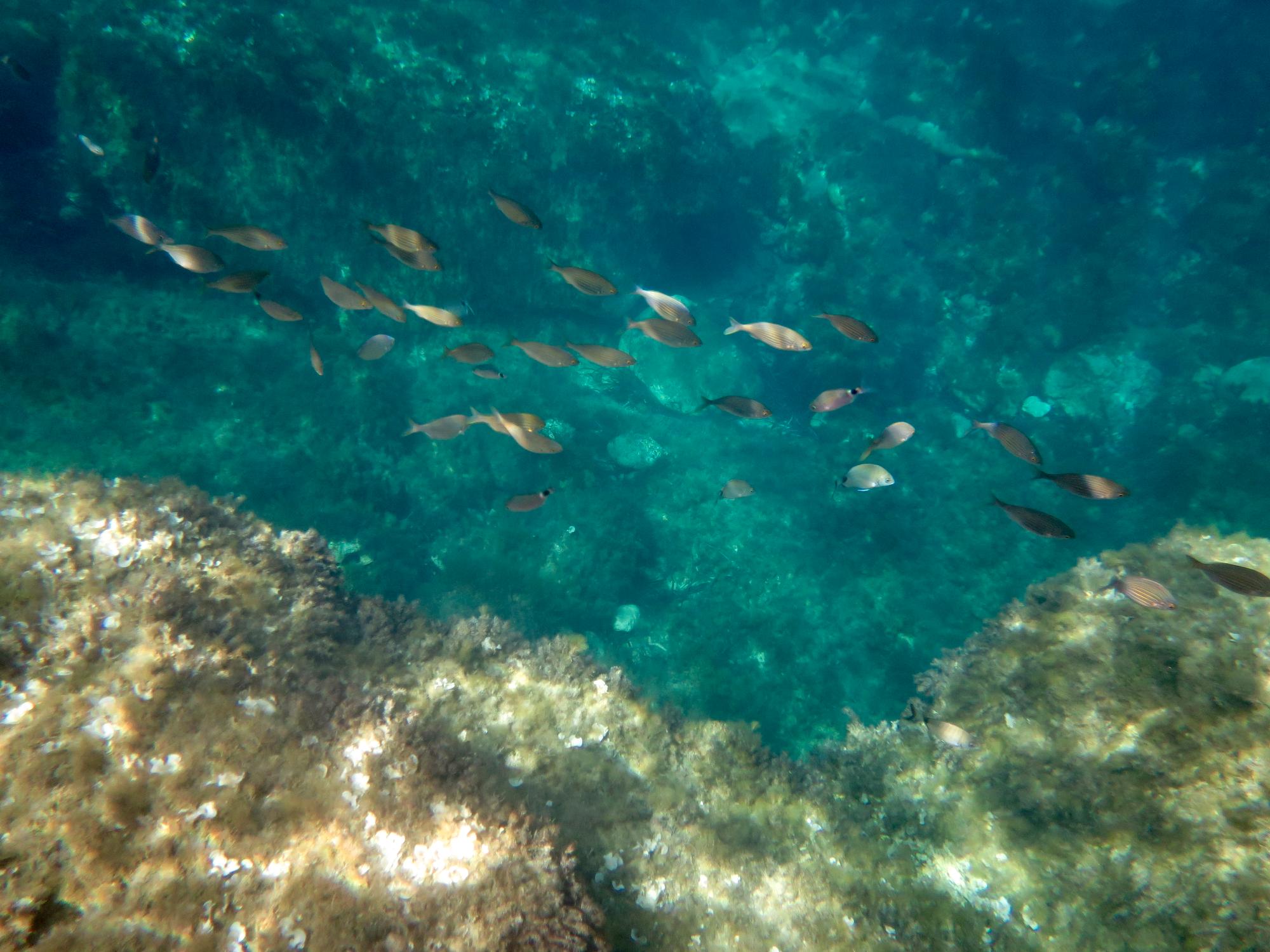Muutama snorklauskuva